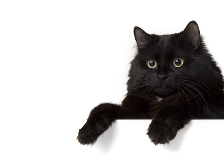 Image of a black cat on a white background photo
