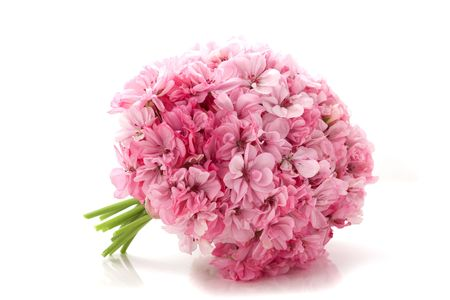 geranium color: Picture of bouquet of pink flowers on a white background