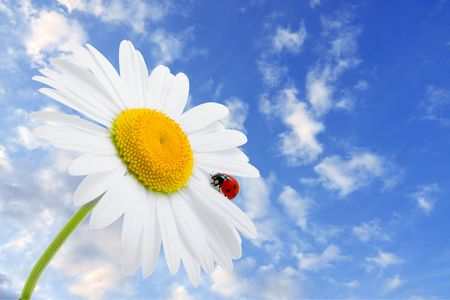 Images of the ladybug is sitting on camomile against the blue sky Stock Photo - 5584671