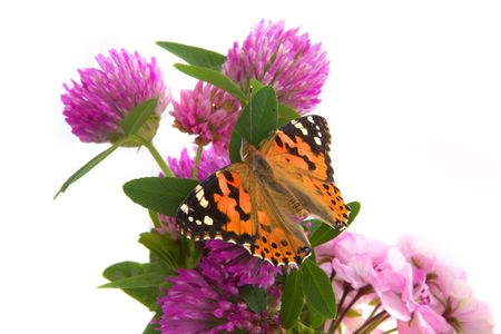 The image of a butterfly sitting on flowers Stock Photo - 6011474