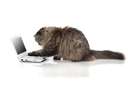 The image of a cat who works for laptop photo