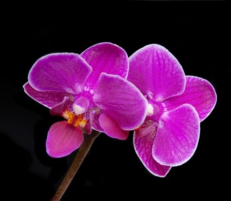 Images of the luxurious orchids photo