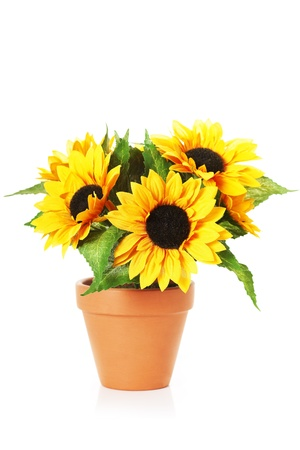 Image of bright sunflowers in a pot Stock Photo