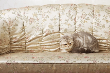 The image of a cat sitting on a beautiful vintage couch photo