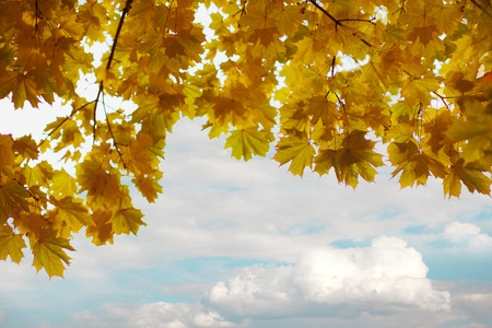 The image of the branches of yellow autumn leaves photo