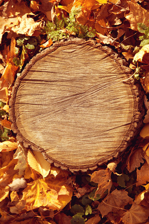 Autumn forest brown wooden fall background. Texture forest wooden stump in autumn leaves. copyspace  photo