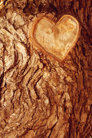 Forest brown wooden background. Texture forest wooden tree bark with sign of the heart. Love in nature Standard-Bild