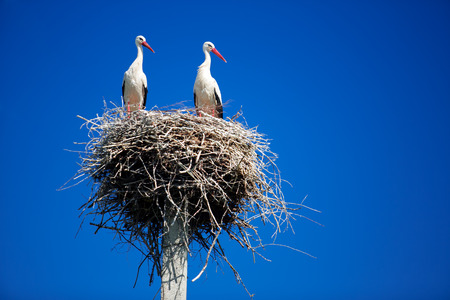 Storks on a background of blue sky Standard-Bild