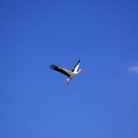Stork on a background of blue sky photo