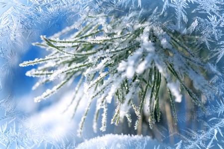 冬の背景、風景。冬の不思議の国の木です。冬のシーン。クリスマス、新年の背景、スプルース パイン。 写真素材