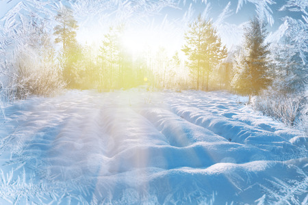 rime: Winter background, landscape. Winter trees in wonderland. Winter scene. Christmas, New Year background Stock Photo