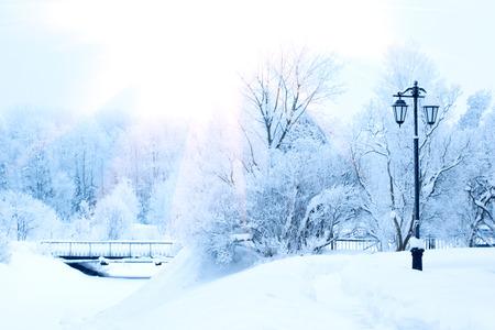 Winter background, landscape. Winter trees in wonderland. Winter scene. Christmas, New Year background Standard-Bild