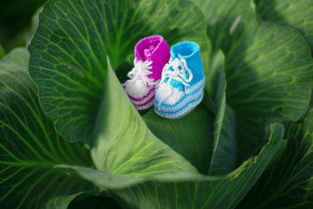 Baby shoes. Newborn, kid art. Beauty child shoes in cabbage. Boy or girl photo