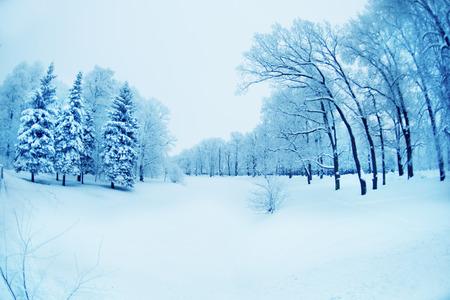 winter sunrise: Winter background, landscape. Winter trees in wonderland. Winter scene. Christmas, New Year background Stock Photo