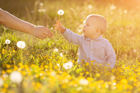 sunshine: Adult hand holds baby dandelion at sunset Kid sitting in a meadow Child in field Concept of protection Allergic to flowers pollen Allergy Backlit Sun Light Autumn Glow Sunshine  Learning new Education