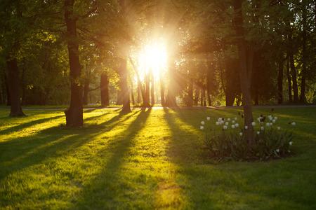 Beautiful nature at evening in spring forest, trees with sun rays. Ð¡oncept of sun wonderland. Summer scene Landscape in summer autumn season. Sunlight background. Summer, autumn, fall season landscape. Summertime, autumntine sun scene. Backlit.