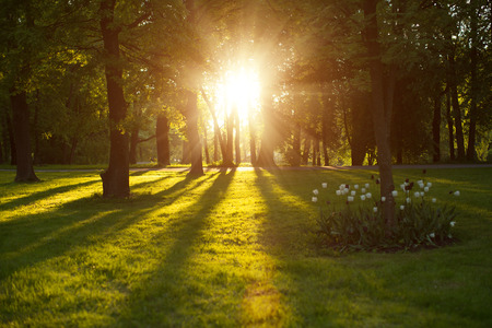 Beautiful nature at evening in spring forest, trees with sun rays. Сoncept of sun wonderland. Summer scene Landscape in summer autumn season. Sunlight background. Summer, autumn, fall season landscape. Summertime, autumntine sun scene. Backlit.