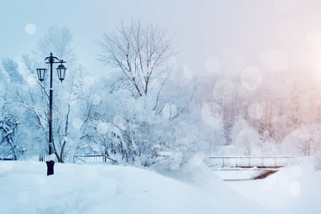 invierno: Fondo del invierno, paisaje. Árboles del invierno en país de las maravillas. Escena de invierno. Navidad, Año Nuevo fondo Foto de archivo