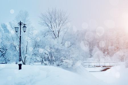 Winter background, landscape. Winter trees in wonderland. Winter scene. Christmas, New Year background Stockfoto