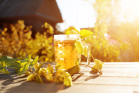 słońce: Piwo. Kubek z piwo i chmielu na zachód słońca letnich tła jesienią. Podświetlany. Wieczorem, strona wiejska w przyrodzie.