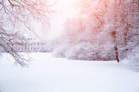 冬の不思議の国の木です。