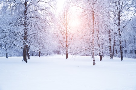 wintery day: Winter background, landscape.
