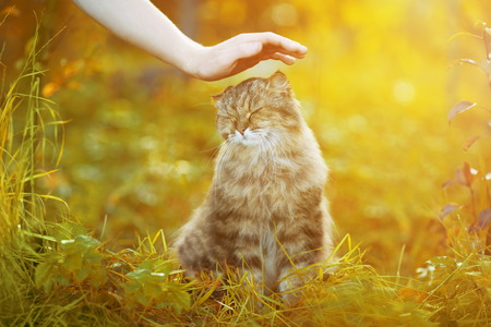 ?at and hand on nature background. Allergies to animals, cat fur. Caring for Pets and stray animals