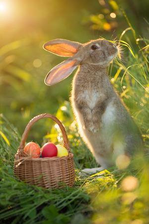 furry animals: Conejo de Pascua con una cesta de huevos. Conejo de Pascua feliz en una tarjeta sobre sus patas traseras con flores al atardecer. liebre linda