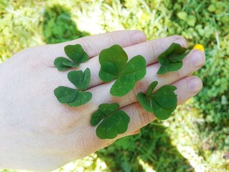 four leaf: Four leaf clover. Stock Photo