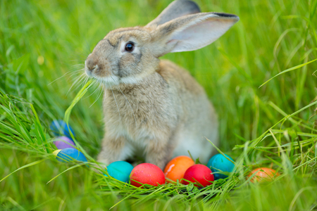 Easter bunny with a basket of eggs on spring flowers background. Card of cute hare outdoor