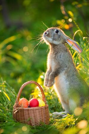 Lapin de Pâques avec un panier d'oeufs sur fond de fleurs de printemps. Carte de lièvre mignon en plein air Banque d'images - 72590453