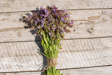 salvia: Sage on a wooden background. Medicinal plant in bloom.