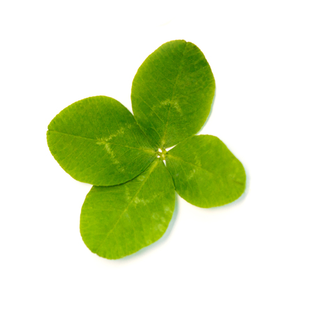 Four-leaf clover. A plant with 4 leaves. A symbol of luck, happiness, success, joy. Concept on the theme of St. Patricks Day. Stock Photo