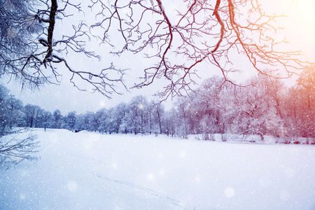 Winter wonderland scene background, landscape. Trees, forest in snow. Christmas, New Year time