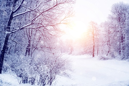 Winter wonderland scene background, landscape. Trees, forest in snow. Christmas, New Year time Фото со стока - 90925412