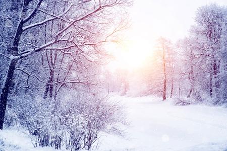 Zimowe tło sceny krainy czarów, krajobraz. Drzewa, las w śniegu. Boże Narodzenie, Nowy Rok