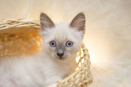 Cute little kittens. Sweet  Cozy baby cat. Nice kitty. Stock fotó