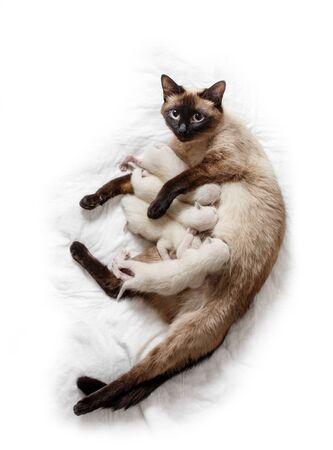 Cat feeds newborn kittens milk