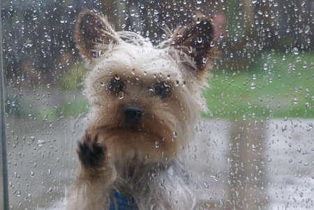 let on: let me in