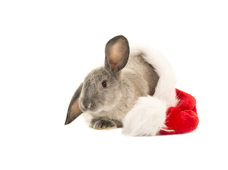 bunny xmas: Grey rabbit in santas hat isolated on a white background
