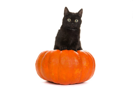Young cute black cat in an orange pumpkin isolated on a white background