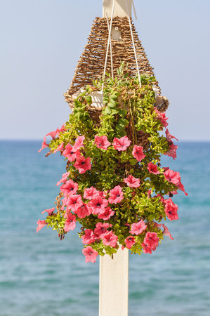 white pole: Pink petunia blooming flowers in a basket on a white pole with on the backround the blue see and blue sky
