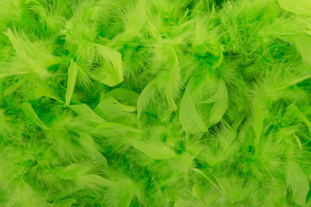 boas: Green feathers from a boa in a full frame image