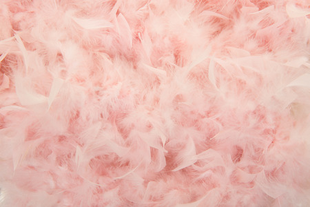 boas: Pastel pink feathers from a boa in a full frame image Stock Photo