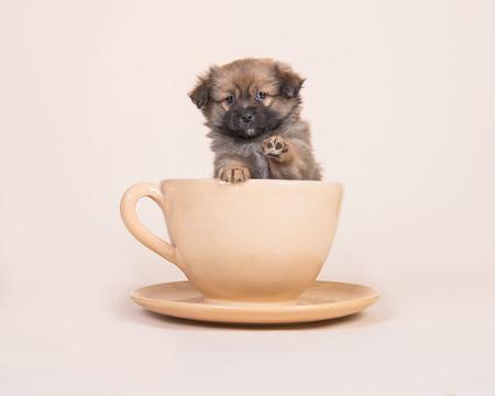 Leuk gemengd rassenspitz puppy in een kop en een schotel die zijn poot op een zand gekleurde achtergrond opheffen