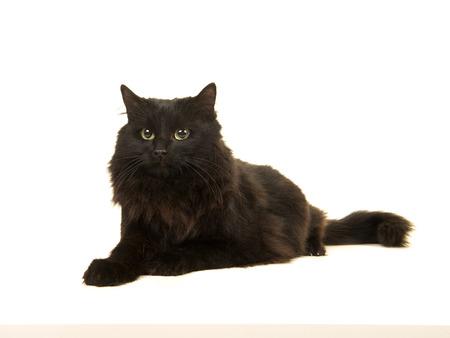 Gatto abbastanza dai capelli lunghi nero che si trovano accanto lontano isolato su una priorità bassa bianca Archivio Fotografico - 81410245