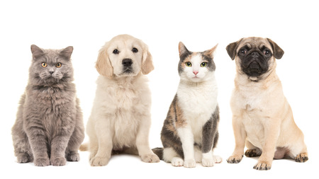 Group of pets, puppy dogs and adult cats on a white background