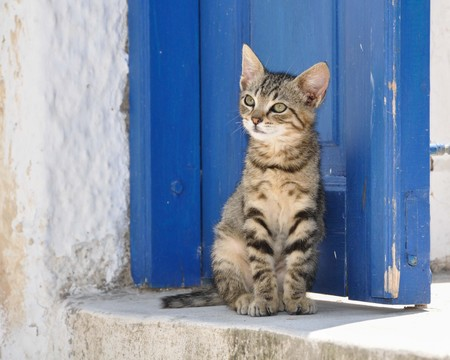 Cute young tabby stray cat in Greece sitting in front of a blue door