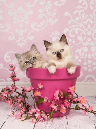 핑크 거실에서 핑크 꽃과 분홍색 화분에 두 헝겊 인형 아기 고양이 거실 설정