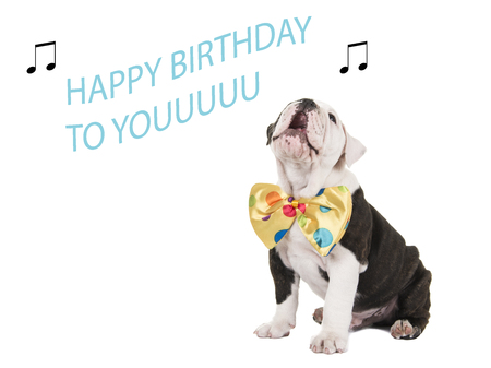 Cute english bulldog puppy sitting and singing happy birthday to you isolated on a white background Stockfoto